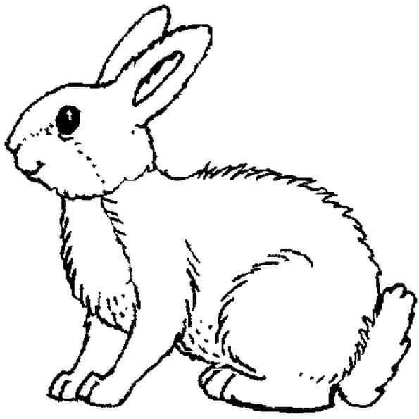Coloriage lapin en Ligne Gratuit à imprimer