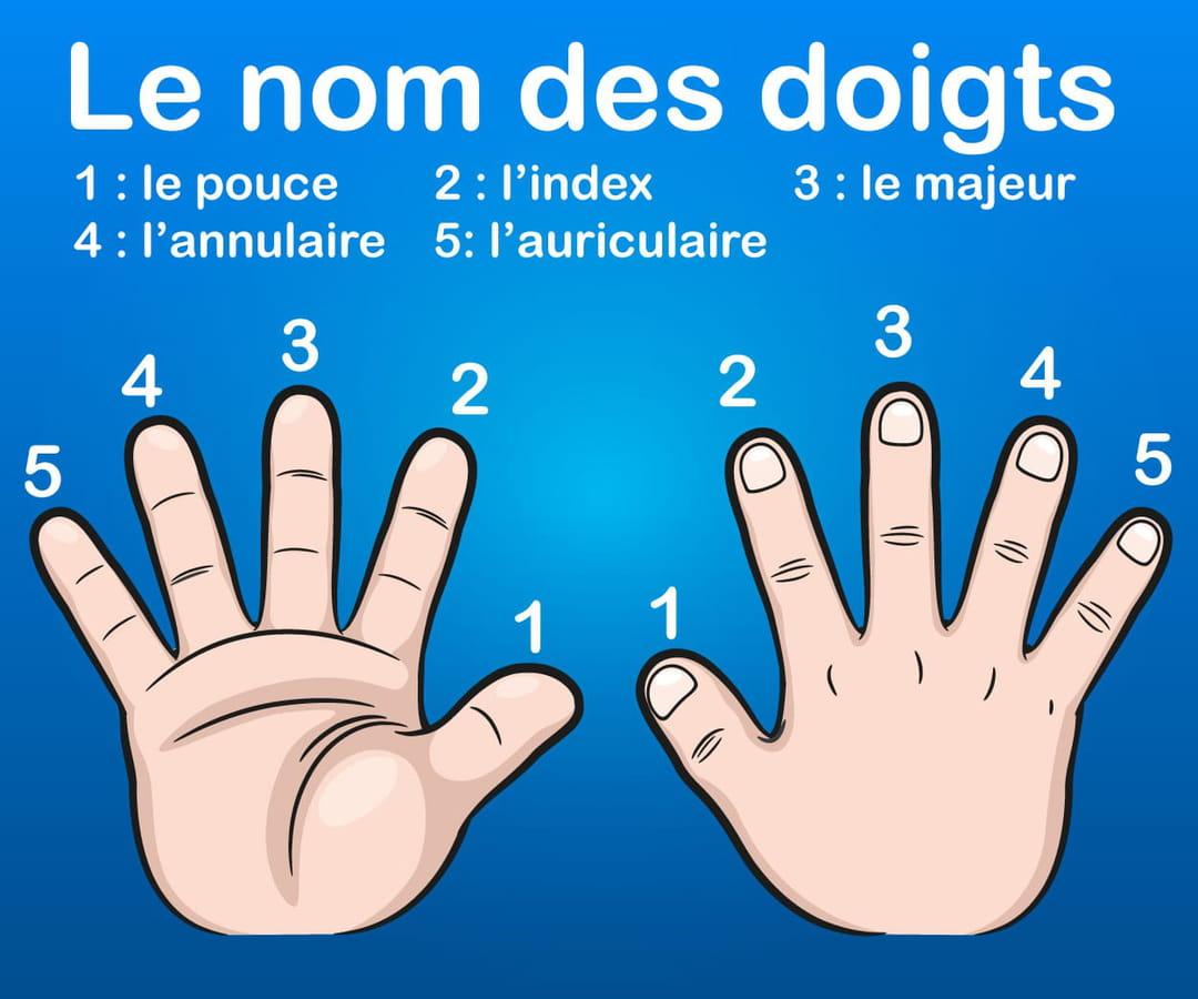 le-nom-des-5-doigts-de-la-main
