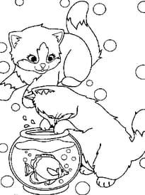 petits chats