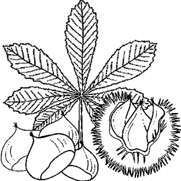 Coloriage Marron Fruit.Coloriage Chataigne En Ligne Gratuit A Imprimer