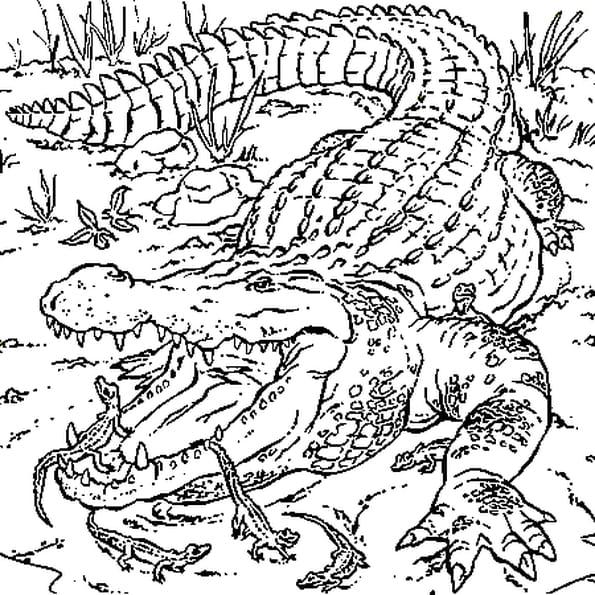 Coloriage Gratuit Crocodile.Coloriage Maman Crocodile Et Ses Petits En Ligne Gratuit A