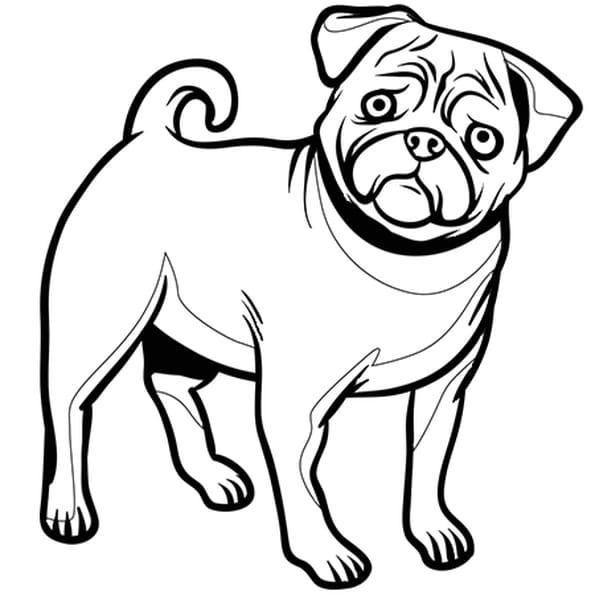 Coloriage chien bouledogue fran ais en ligne gratuit - Dessin d un chien ...