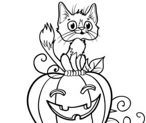 Chat sur une citrouille d'Halloween