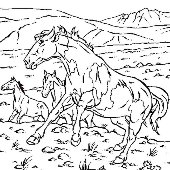 Coloriage cheval sauvage en ligne gratuit imprimer - Dessin de chevale ...