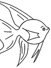 poisson d'avril 3