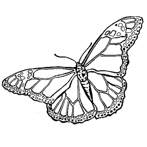 Coloriage Papillon en Ligne Gratuit à imprimer