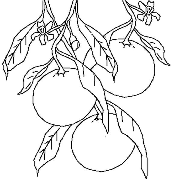 Coloriage Mandarine