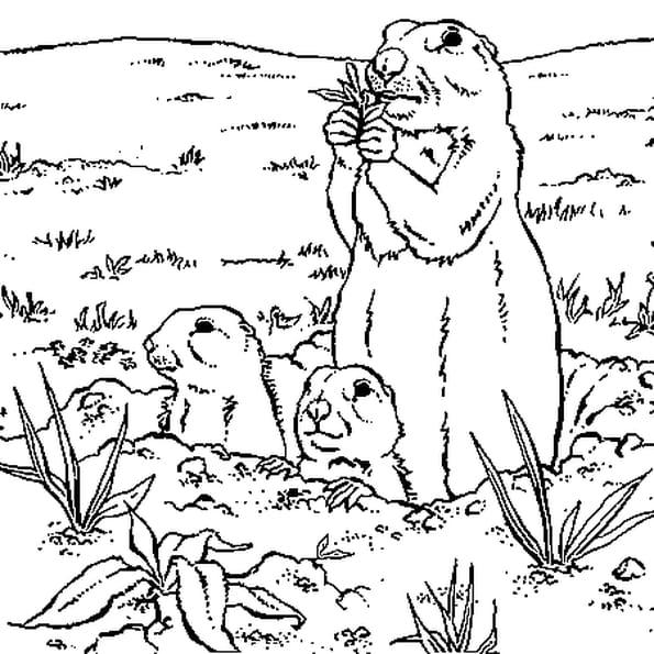 Coloriage marmotte en Ligne Gratuit à imprimer