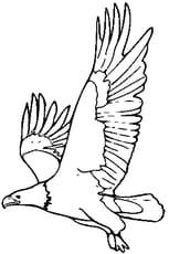 Coloriage aigle en Ligne Gratuit à imprimer
