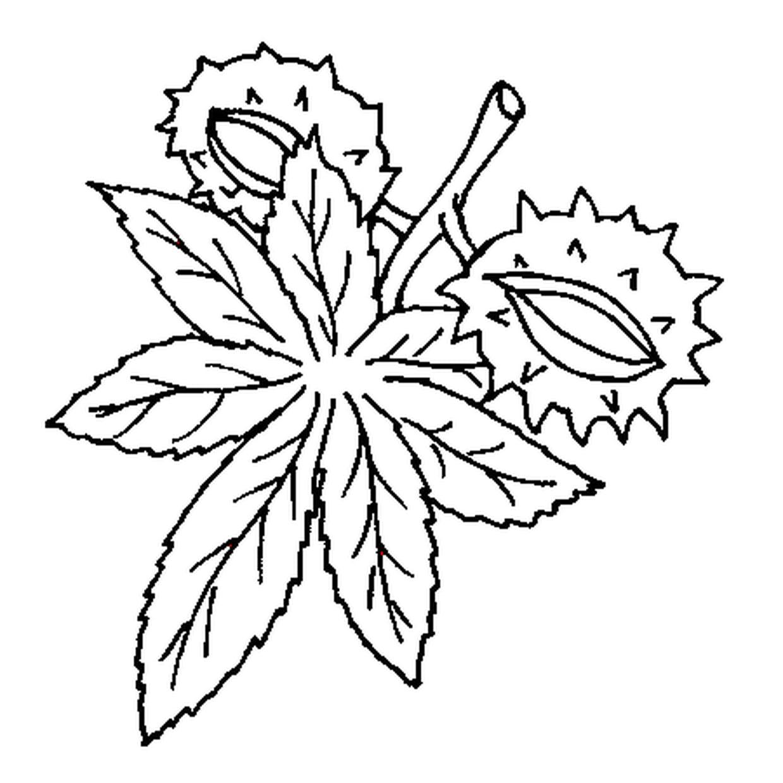 Coloriage Marron Fruit.Coloriage Marron En Ligne Gratuit A Imprimer