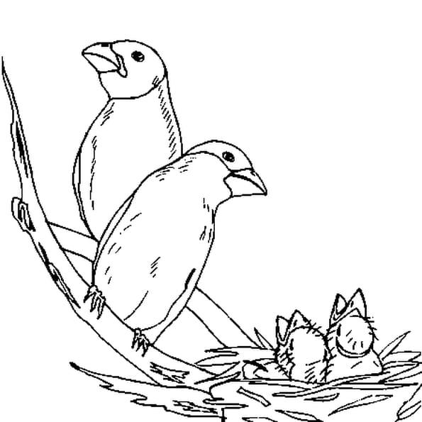 dessin oiseaux a colorier