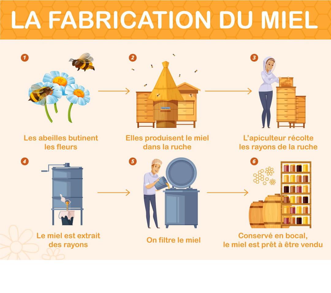 infographie-des-etapes-de-fabrication-du-miel-par-les-abeilles