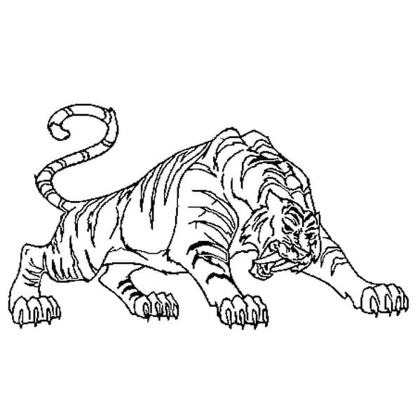 Dessin Tigre à dents de sabre a colorier