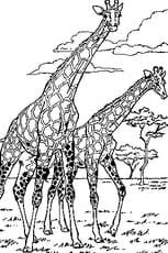 De Girafe