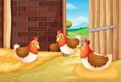 Comptine Les poulets