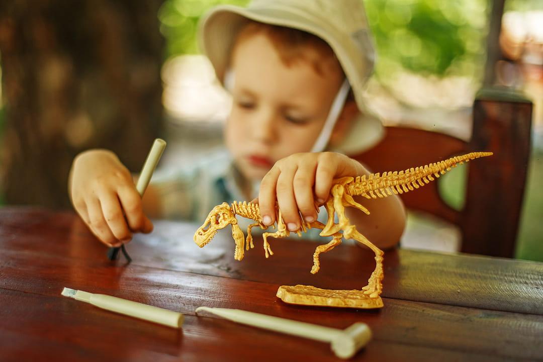 Enfant qui apprend les sciences avec un squelette de dinosaure