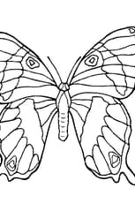 Coloriage Joli Papillon