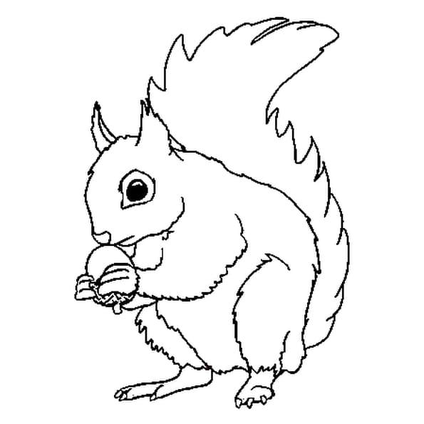 coloriage ecureuil en ligne gratuit imprimer - Coloriage Cureuil