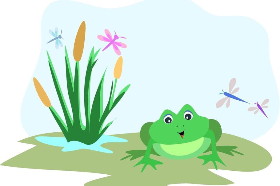 Comptine Les grenouilles