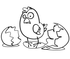 Poussin Pâques