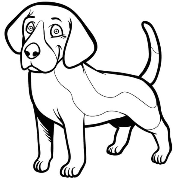 chien beagle coloriage