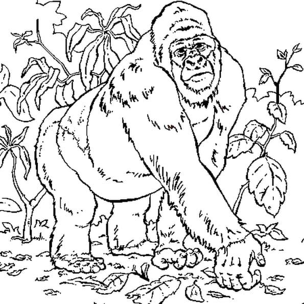 Coloriage gorille en ligne gratuit imprimer - Dessin d un gorille ...