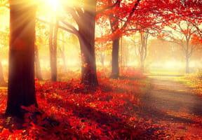 Coloriages automne