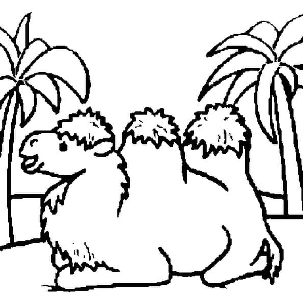 Coloriage chameau en Ligne Gratuit à imprimer
