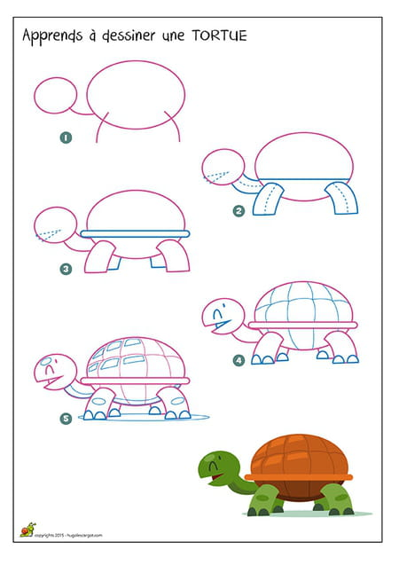 Dessiner une tortue - Comment dessiner une tortue ...