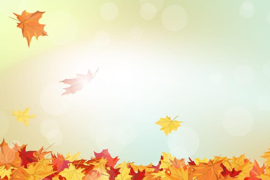 Comptine L'automne au coin du bois