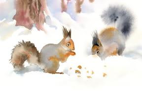 Moi je suis un écureuil