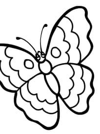 papillon rigolo