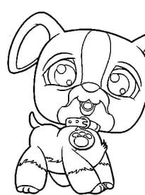 pet shop chien