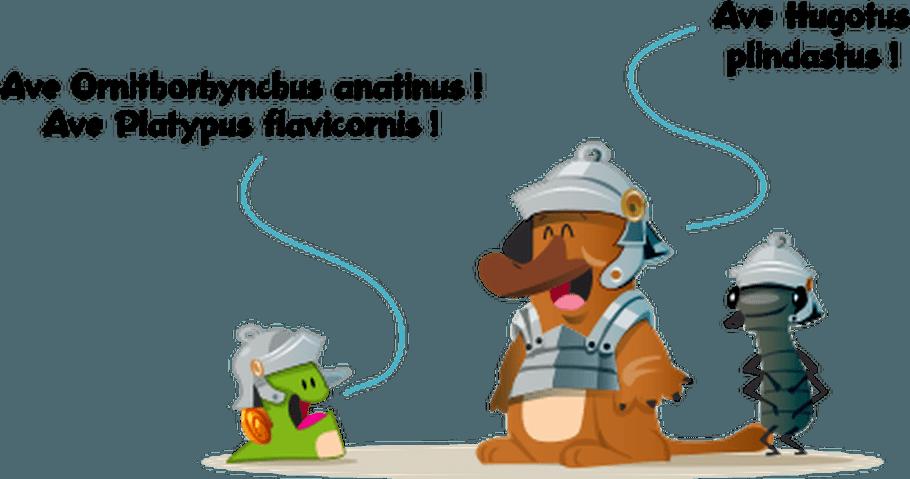 L'ornithorynque, un drôle d'animal!