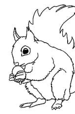 Coloriage ecureuil en ligne gratuit imprimer - Coloriage d ecureuil ...