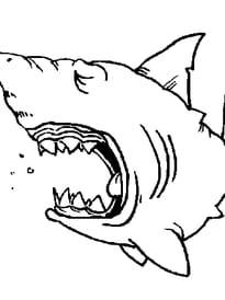 de requin