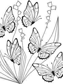Coloriage Papillon Sur Hugolescargot Com