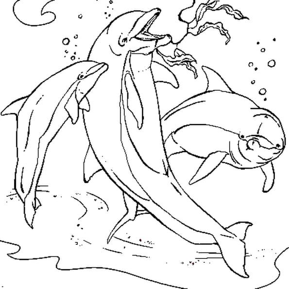 Coloriage dauphins en ligne gratuit imprimer - Jeux de coloriage de dauphin ...