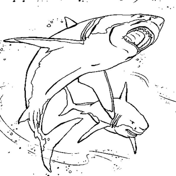 Coloriage Requins en Ligne Gratuit à imprimer