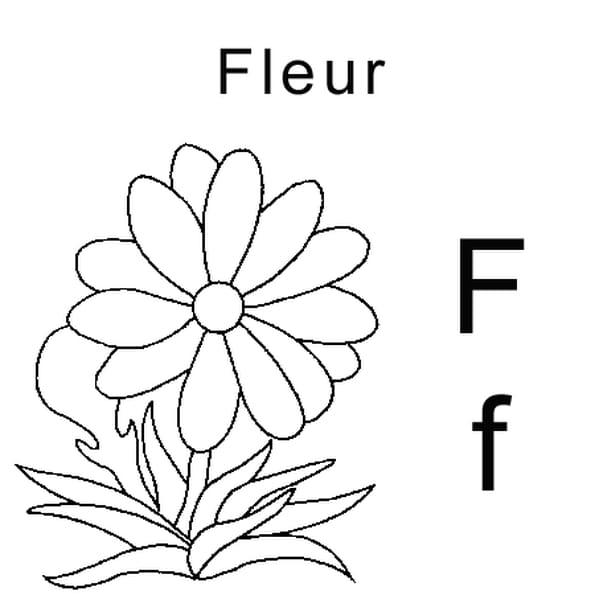 Dessin lettre F comme fleur a colorier