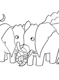 Coloriage Famille Elephant.Coloriage Elephant Sur Hugolescargot Com
