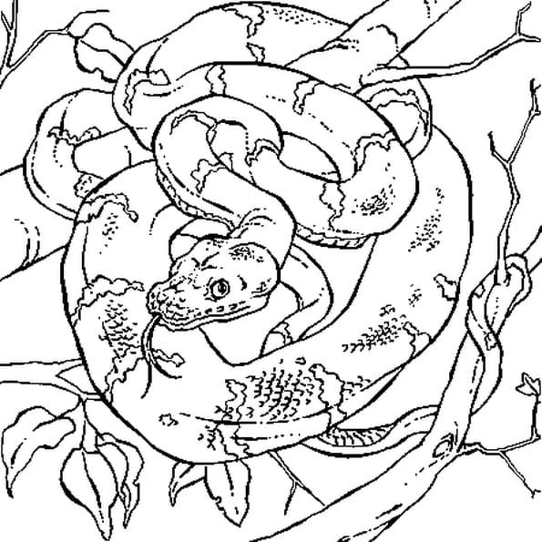 Coloriage boa dans la jungle en ligne gratuit imprimer - Feuille de coloriage gratuit ...