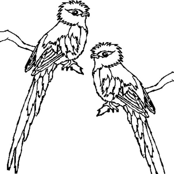 Coloriage Quetzal en Ligne Gratuit à imprimer