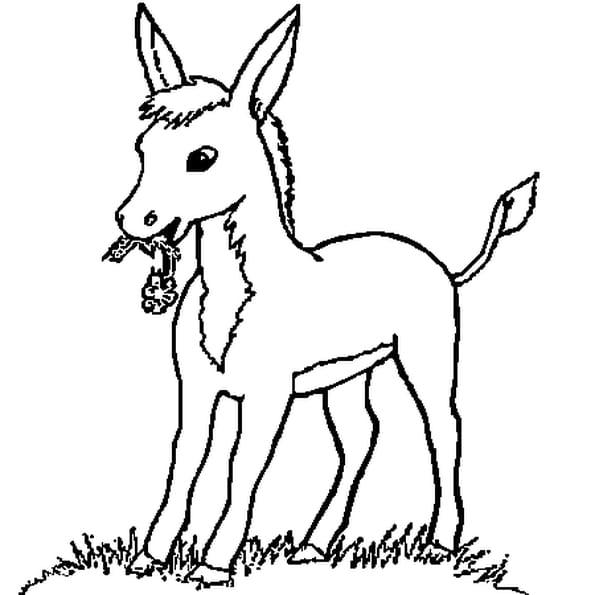 Coloriage petit cheval en ligne gratuit imprimer - Coloriage cheval et poulain ...
