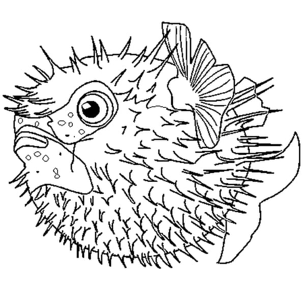 Coloriage poisson lune en ligne gratuit imprimer - Poisson a imprimer gratuitement ...