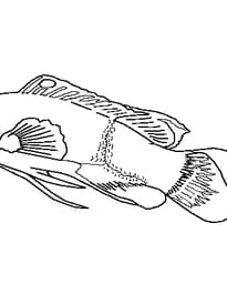 poisson d'avril 4