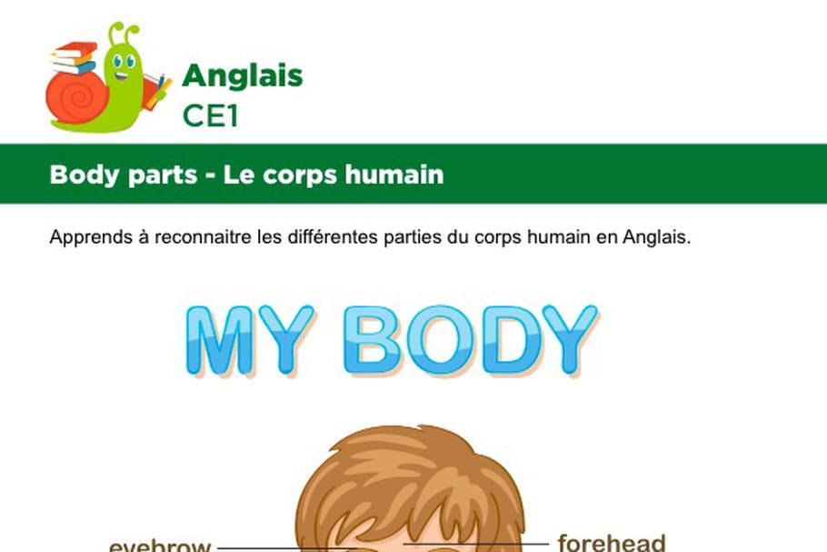 Le corps en Anglais, garçon vue de face