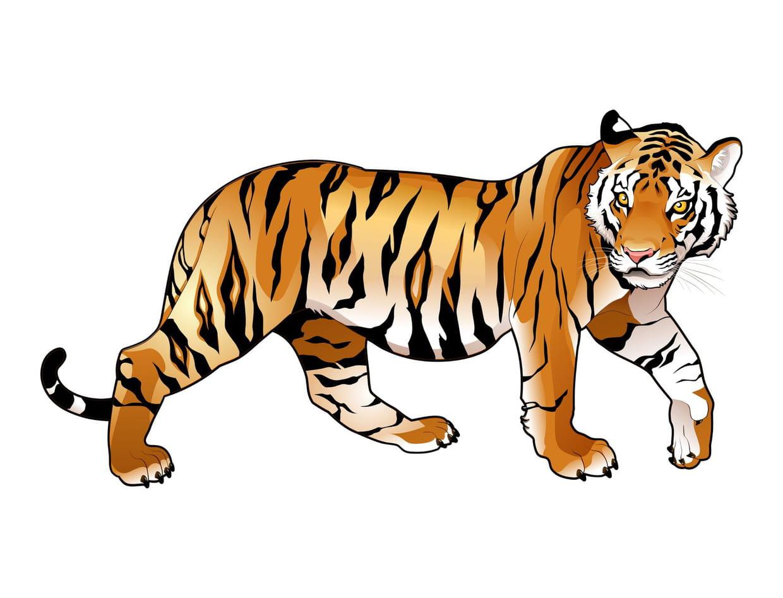 Coloriage f lins tigres lions panth res sur for Immagini tigre da colorare