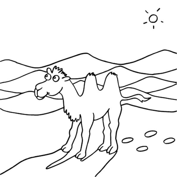 Coloriage Dessin chameau en Ligne Gratuit à imprimer