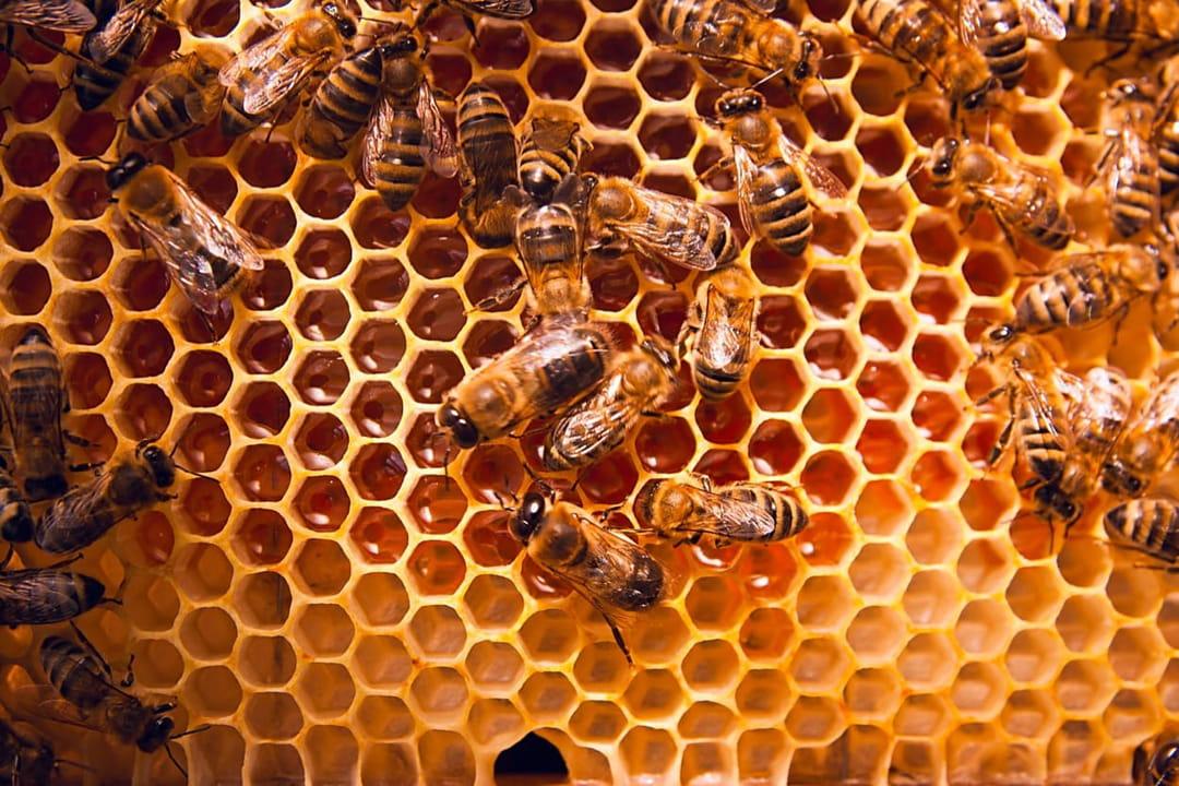 abeilles-dans-un-ruche-sur-un-rayon-de-miel